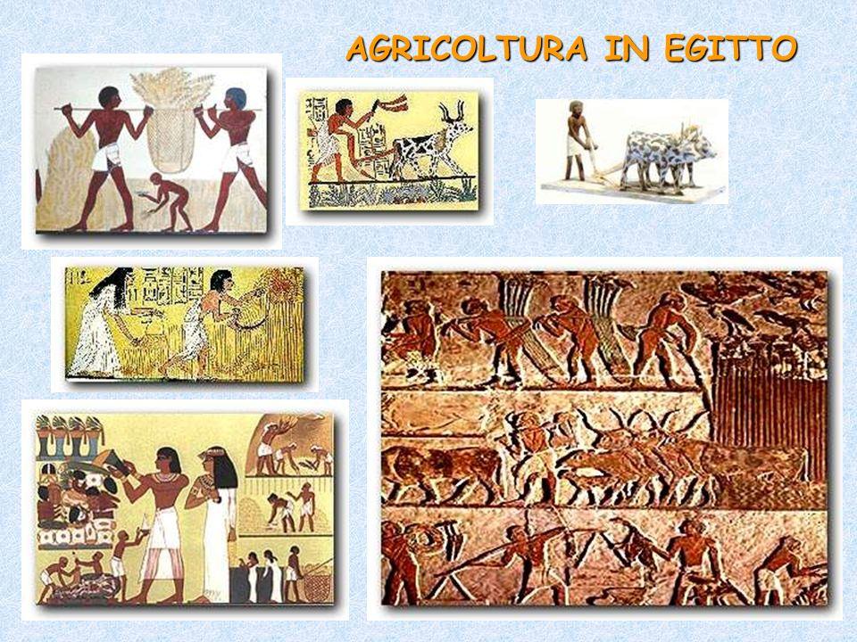 AGRICOLTURA IN EGITTO