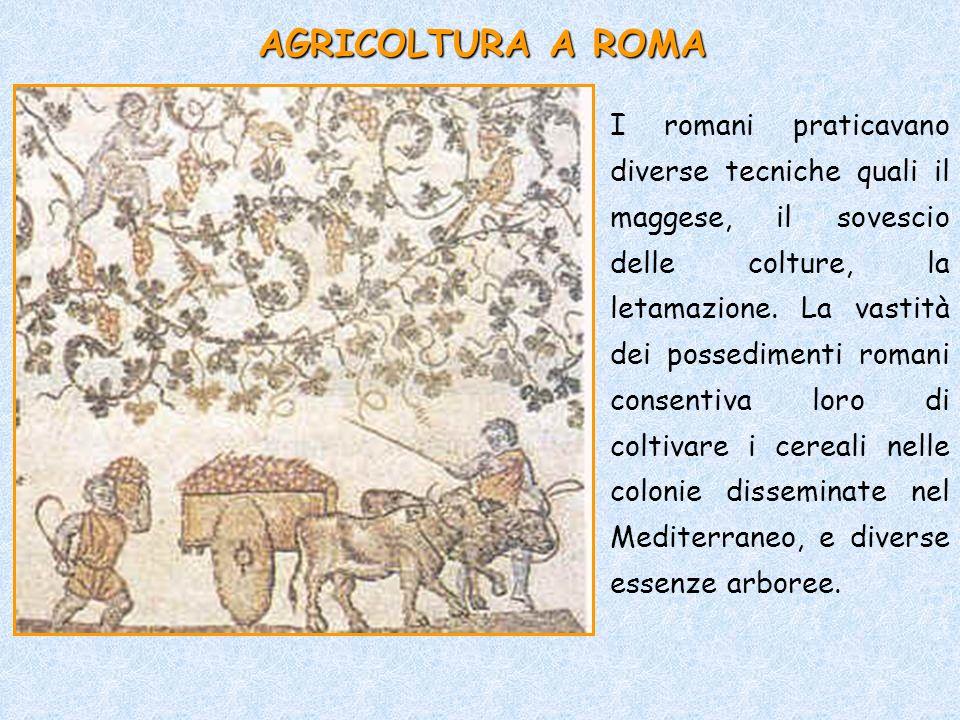 AGRICOLTURA A ROMA I romani praticavano diverse tecniche quali il maggese, il sovescio delle colture, la letamazione. La vastità dei possedimenti roma