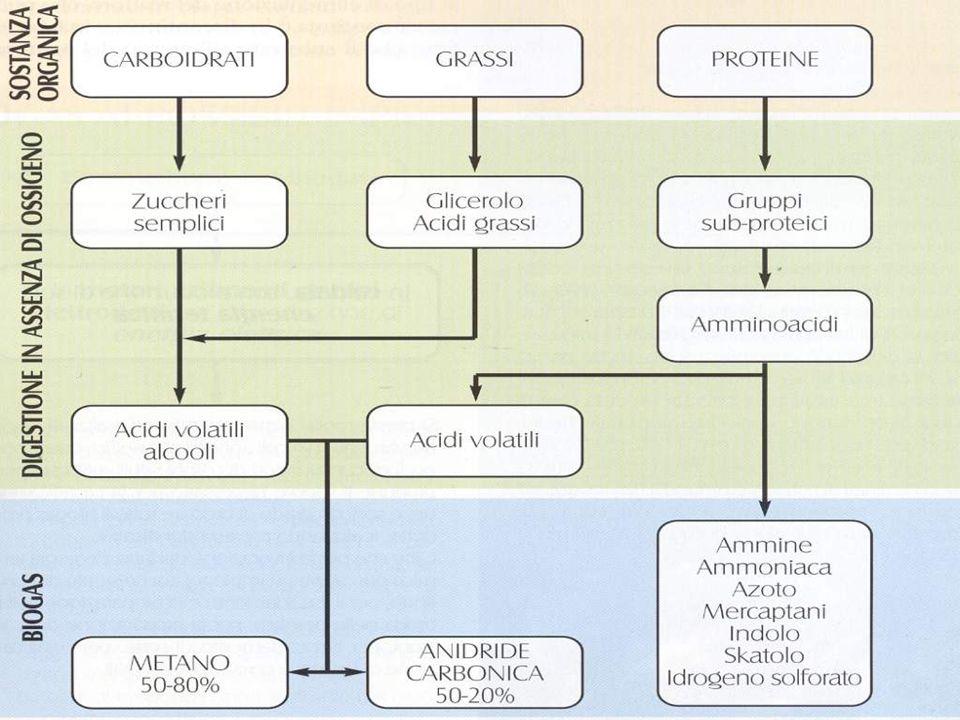 Residui industriali o municipali di base organica.