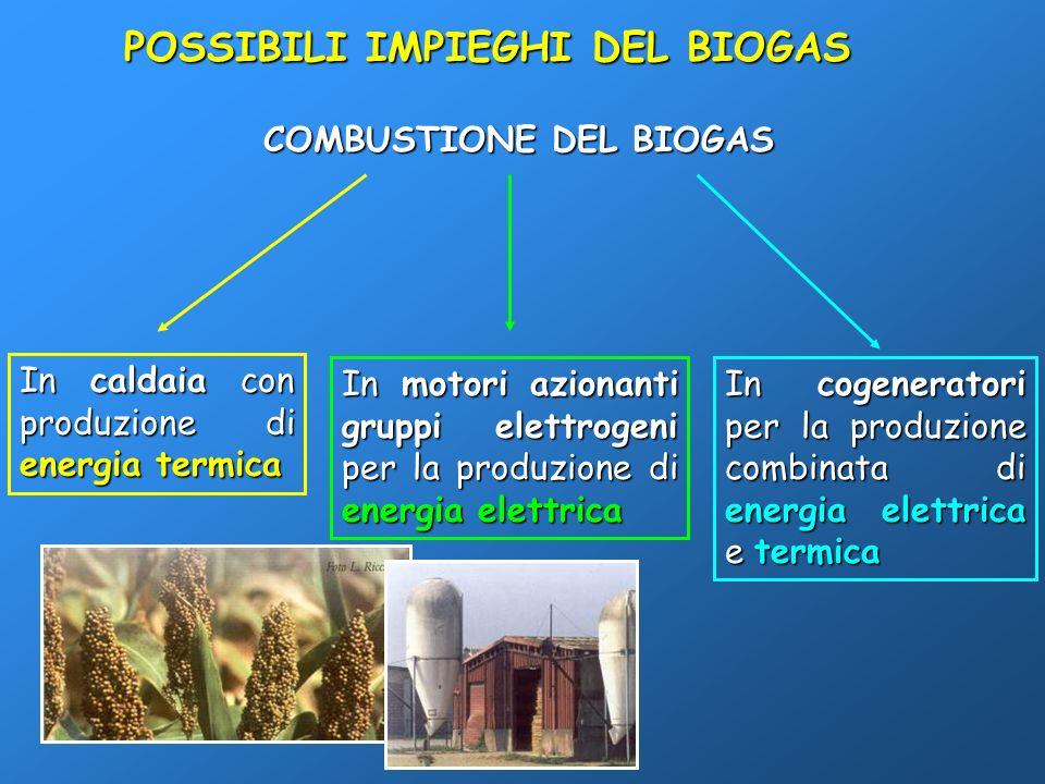 POSSIBILI IMPIEGHI DEL BIOGAS COMBUSTIONE DEL BIOGAS In caldaia con produzione di energia termica In motori azionanti gruppi elettrogeni per la produz