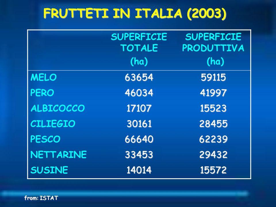 SUPERFICIE TOTALE (ha) SUPERFICIE PRODUTTIVA (ha) MELO6365459115 PERO4603441997 ALBICOCCO1710715523 CILIEGIO3016128455 PESCO6664062239 NETTARINE334532