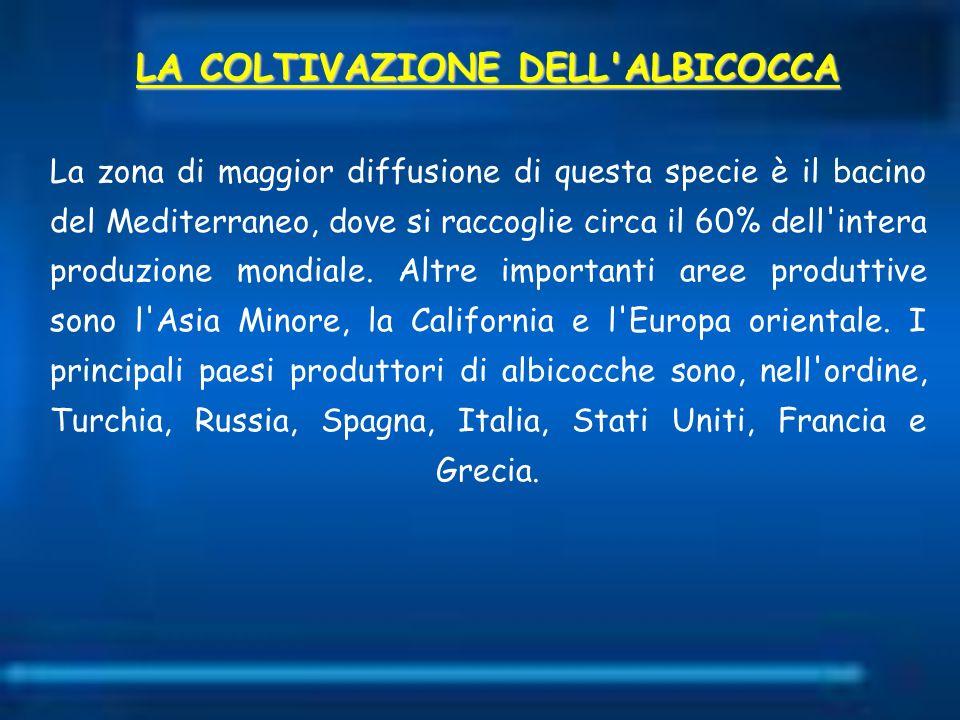 LA COLTIVAZIONE DELL'ALBICOCCA La zona di maggior diffusione di questa specie è il bacino del Mediterraneo, dove si raccoglie circa il 60% dell'intera