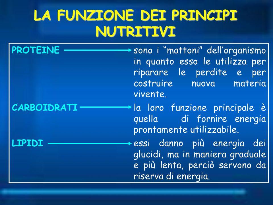 LA FUNZIONE DEI PRINCIPI NUTRITIVI PROTEINEsono i mattoni dellorganismo in quanto esso le utilizza per riparare le perdite e per costruire nuova mater