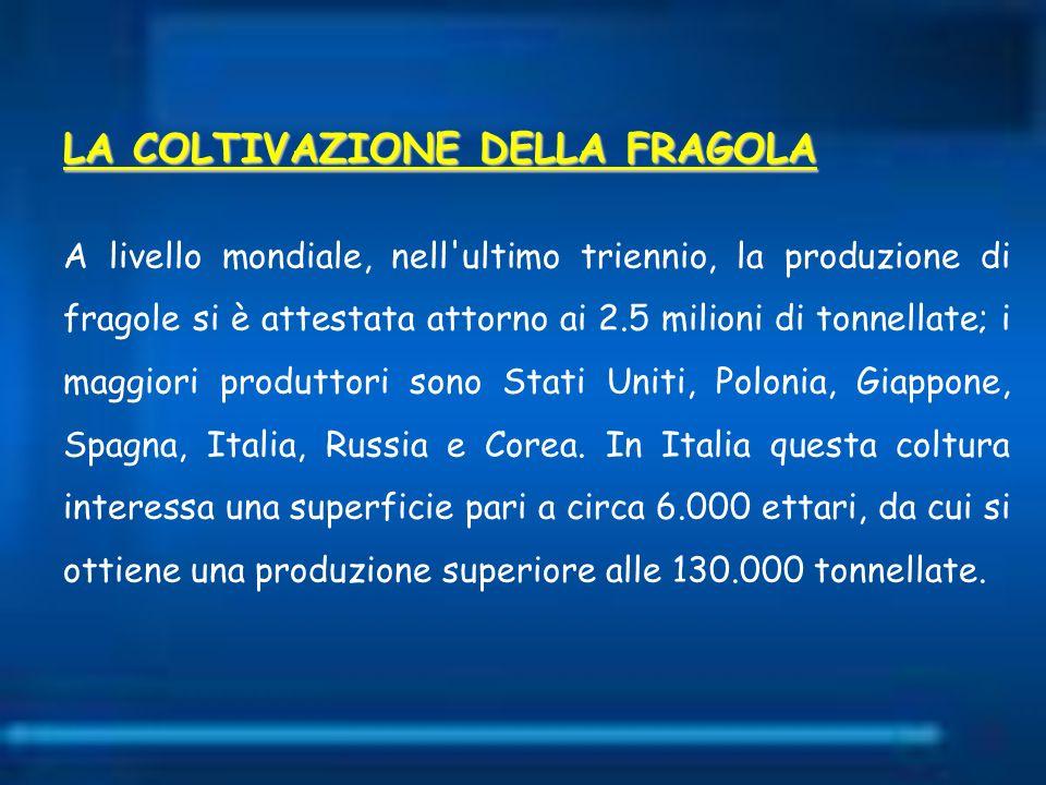 LA COLTIVAZIONE DELLA FRAGOLA A livello mondiale, nell'ultimo triennio, la produzione di fragole si è attestata attorno ai 2.5 milioni di tonnellate;