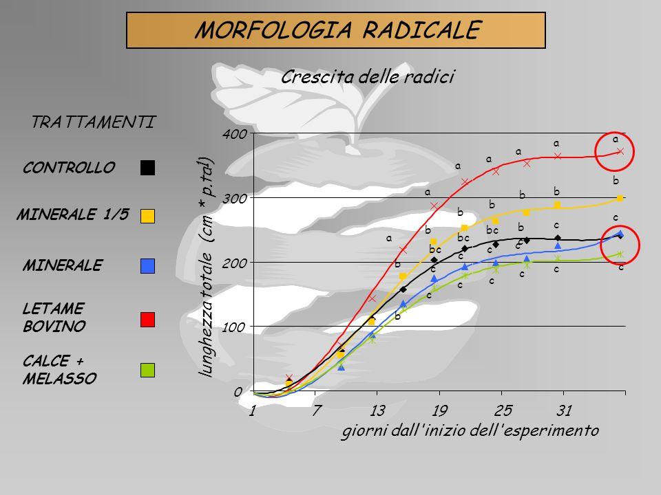MINERALE LETAME BOVINO CALCE + MELASSO MINERALE 1/5 CONTROLLO TRATTAMENTI MORFOLOGIA RADICALE