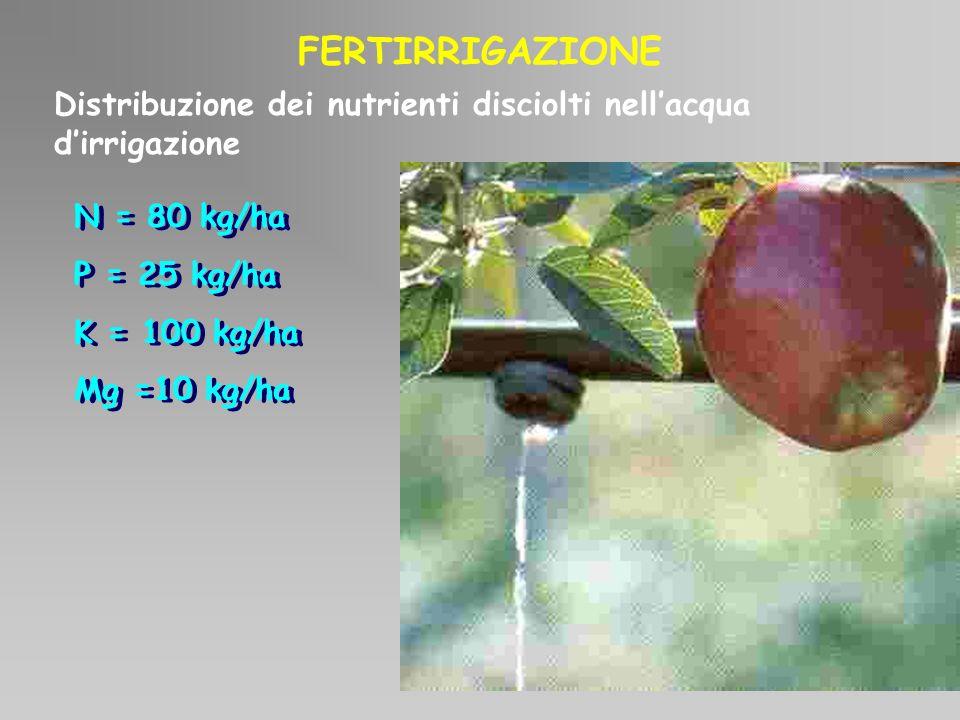 Distribuzione dei nutrienti disciolti nellacqua dirrigazione FERTIRRIGAZIONE N = 80 kg/ha P = 25 kg/ha K = 100 kg/ha Mg =10 kg/ha N = 80 kg/ha P = 25