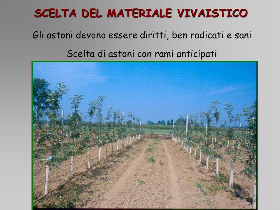 Incidenza dei singoli zuccheri 0% 20% 40% 60% 80% 100% 123456 Inositolo Sorbitolo Glucosio Saccarosio Fruttosio Gala 1Tesi tradizionale 2Tesi tradizionale + fogliare 3Tesi fertirrigazione 100% 4Tesi fertirrigazione 50% 5Tesi fertirrigazione 50% - no K 6Tesi fertirrigazione 50% - no P Fuji 0% 20% 40% 60% 80% 100% 123456