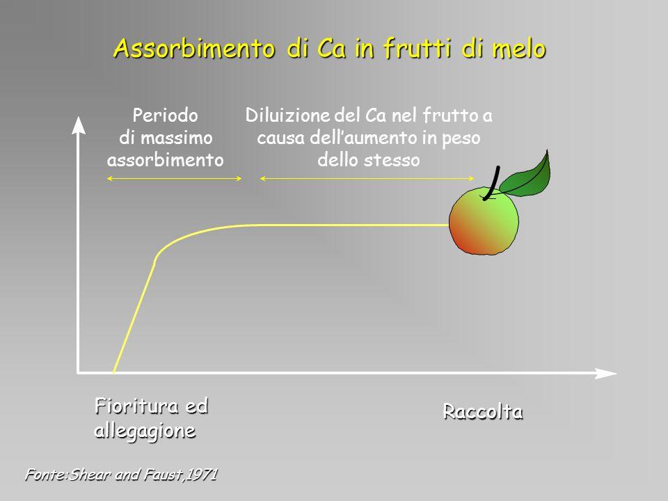 Fioritura ed allegagione Periodo di massimo assorbimento Diluizione del Ca nel frutto a causa dellaumento in peso dello stesso Raccolta Assorbimento d