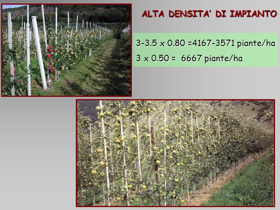 Aminoacidi predominanti Fuji 1Tesi tradizionale 2Tesi tradizionale + fogliare 3Tesi fertirrigazione 100% 4Tesi fertirrigazione 50% 5Tesi fertirrigazione 50% - no K 6Tesi fertirrigazione 50% - no P
