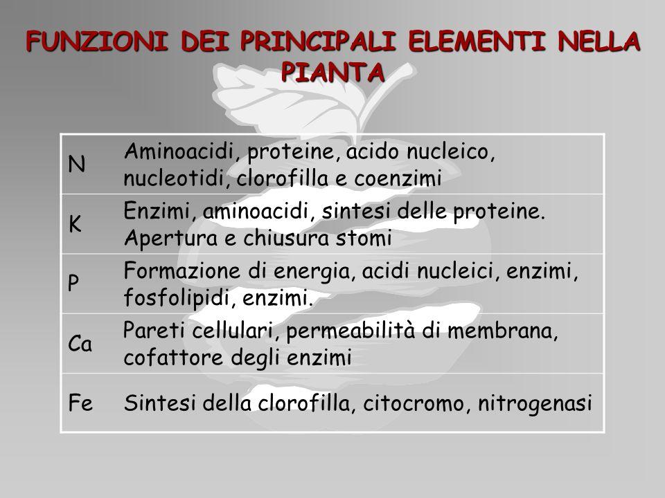 FUNZIONI DEI PRINCIPALI ELEMENTI NELLA PIANTA N Aminoacidi, proteine, acido nucleico, nucleotidi, clorofilla e coenzimi K Enzimi, aminoacidi, sintesi