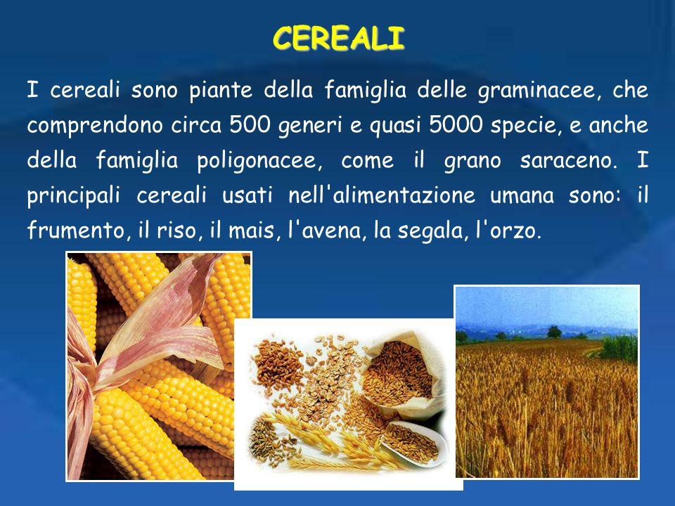 I cereali sono piante della famiglia delle graminacee, che comprendono circa 500 generi e quasi 5000 specie, e anche della famiglia poligonacee, come