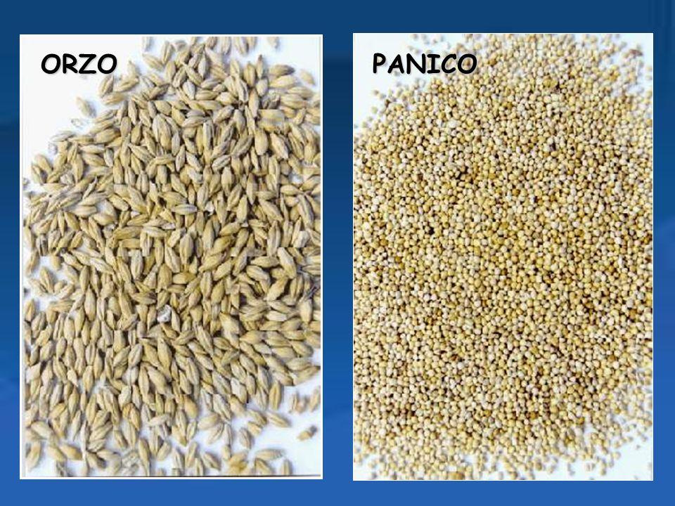 COMPOSIZIONE MEDIA DEI CEREALI (TIPO PASTA DI SEMOLA): G 100 Kcal346Colesterolo0 g Acqua12,4 gFibra al.5,1g Proteine10,8gCalcio17g Grassi0,3 gFosforo165 g Glicidi74,9 gFerro1,3 g