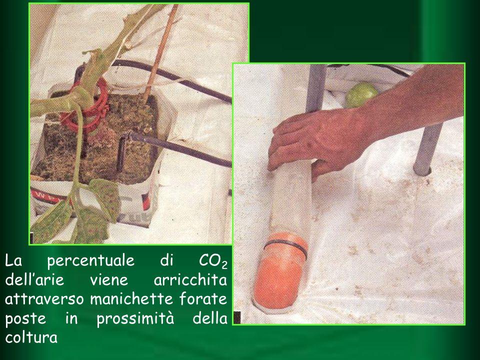 La percentuale di CO 2 dellarie viene arricchita attraverso manichette forate poste in prossimità della coltura