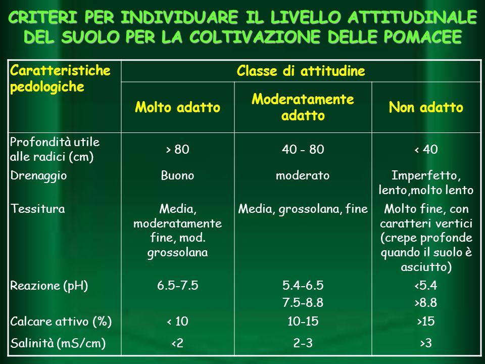 Caratteristiche pedologiche Classe di attitudine Molto adatto Moderatamente adatto Non adatto Profondità utile alle radici (cm) > 8040 - 80< 40 Drenag