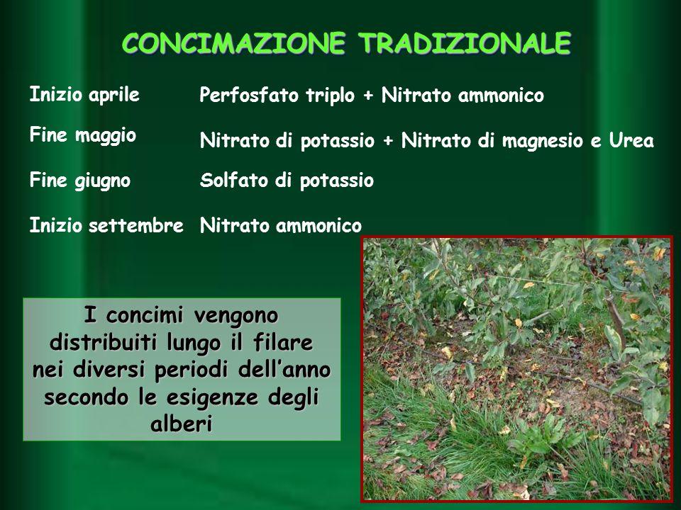 I concimi vengono distribuiti lungo il filare nei diversi periodi dellanno secondo le esigenze degli alberi Inizio aprile Fine maggio Fine giugno Iniz