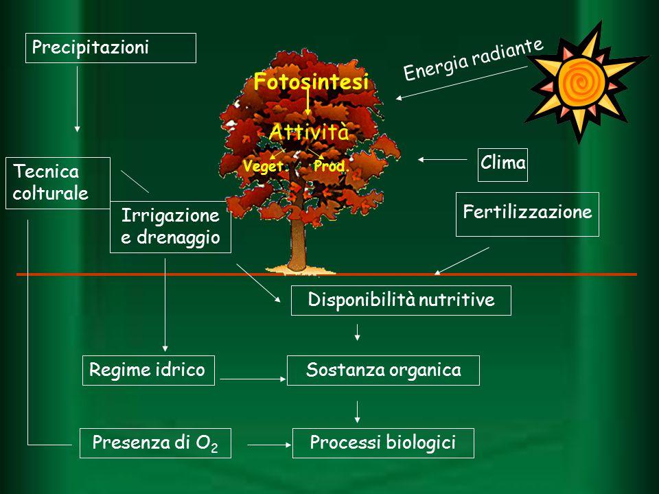 Energia radiante Precipitazioni Tecnica colturale Irrigazione e drenaggio Regime idrico Presenza di O 2 Disponibilità nutritive Sostanza organica Proc