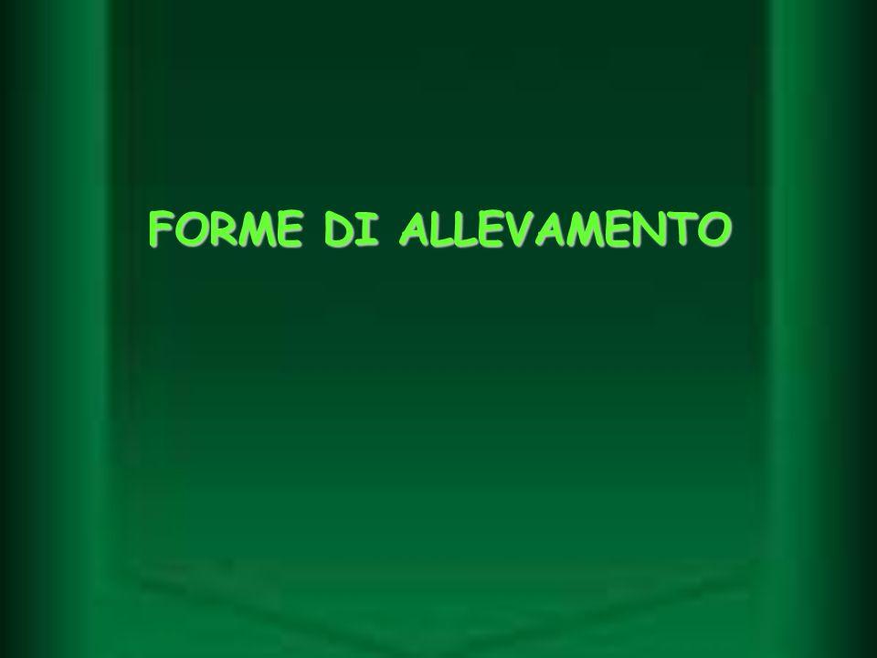 FORME DI ALLEVAMENTO