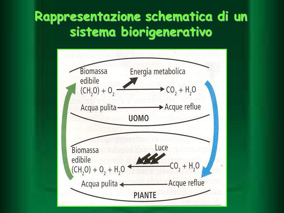 Rappresentazione schematica di un sistema biorigenerativo