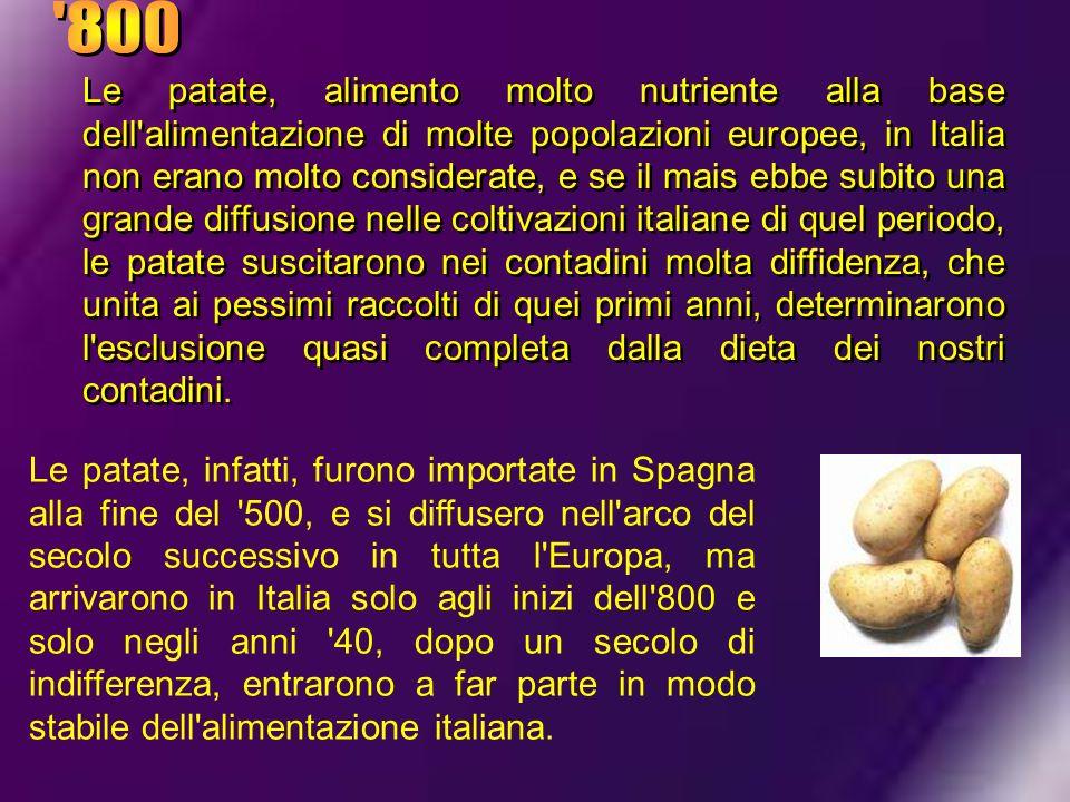 Le patate, alimento molto nutriente alla base dell'alimentazione di molte popolazioni europee, in Italia non erano molto considerate, e se il mais ebb