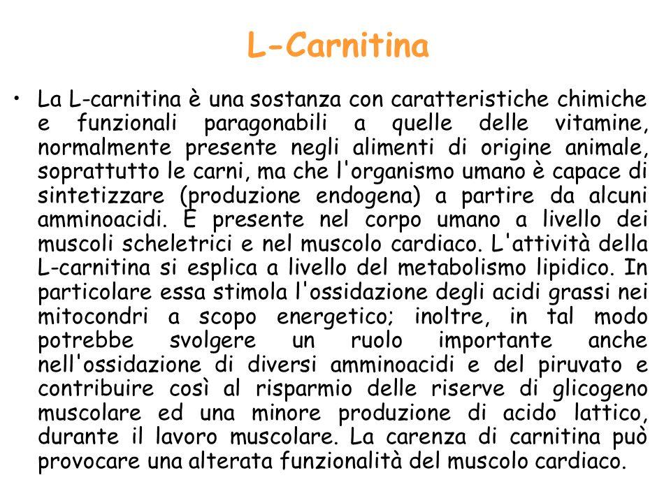 L Carnitina La L carnitina è una sostanza con caratteristiche chimiche e funzionali paragonabili a quelle delle vitamine, normalmente presente negli a