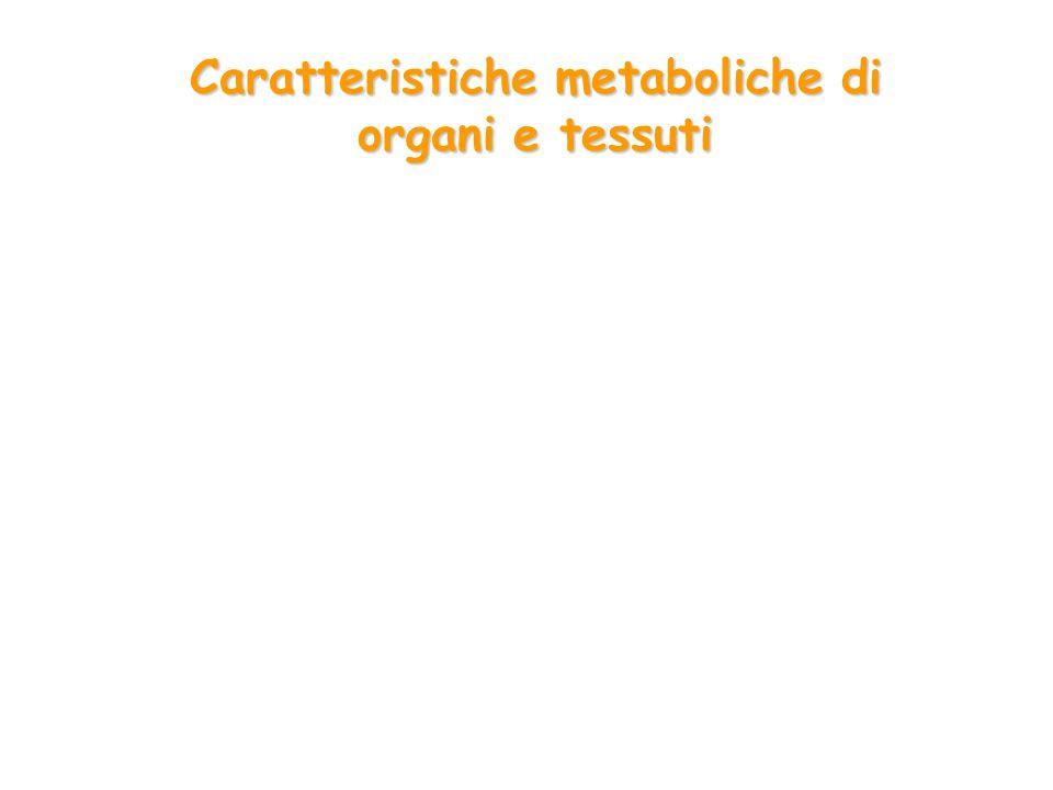 Caratteristiche metaboliche di organi e tessuti