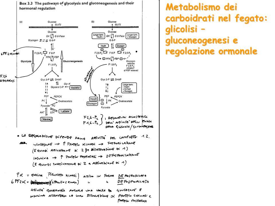 Integrazione del metabolismo tra tessuti ed organi: Fegato sintesi/deposizione di glucosio; sintesi/utilizzazione di TGC; utilizzazione di AA; sintesi dellUrea Adipociti sintesi/deposizione/mobilizzazione di TGC Muscolo utilizzazione di proteine; deposizione/mobilizzazione di glucosio; utilizzazioen di TCG Eritrocita, rene (mid.) glicolisi Cervello ossidazione glucosio