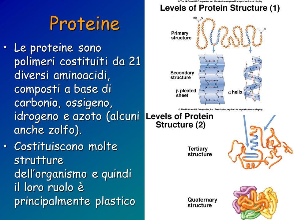 Proteine Le proteine sono polimeri costituiti da 21 diversi aminoacidi, composti a base di carbonio, ossigeno, idrogeno e azoto (alcuni anche zolfo).L