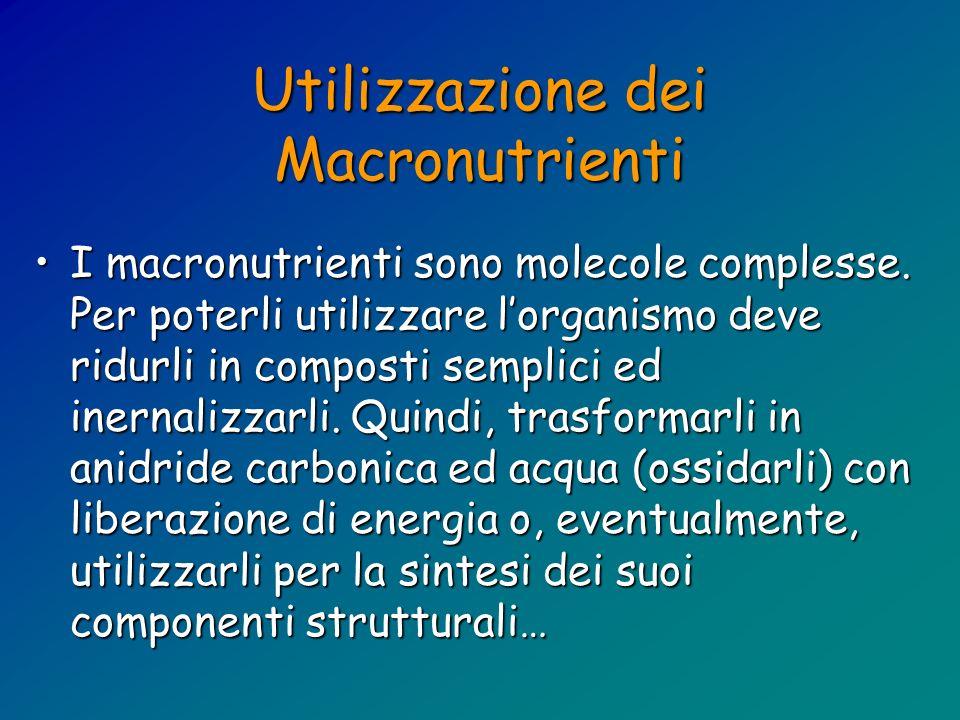 Utilizzazione dei Macronutrienti I macronutrienti sono molecole complesse. Per poterli utilizzare lorganismo deve ridurli in composti semplici ed iner