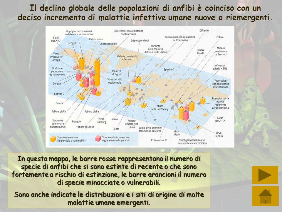 Il declino globale delle popolazioni di anfibi è coinciso con un deciso incremento di malattie infettive umane nuove o riemergenti. In questa mappa, l