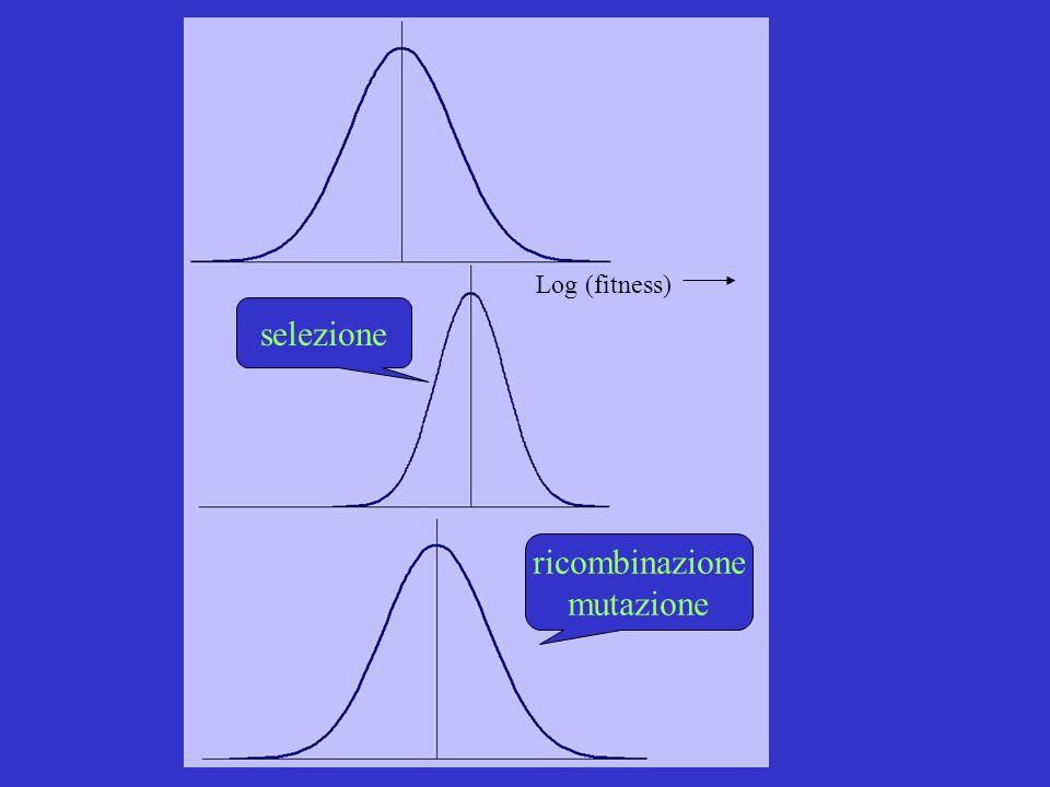 Log (fitness) selezione ricombinazione mutazione