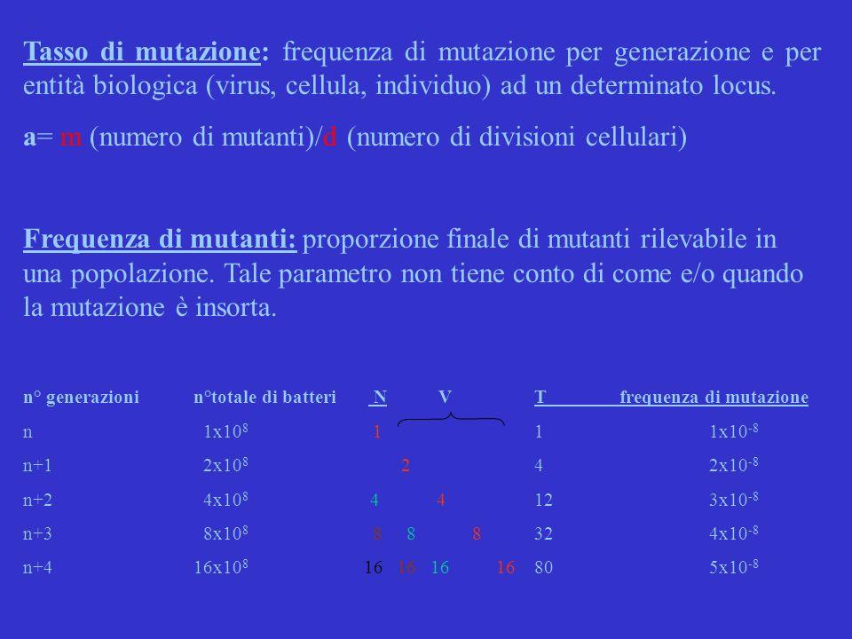 Tasso di mutazione: frequenza di mutazione per generazione e per entità biologica (virus, cellula, individuo) ad un determinato locus. a= m (numero di