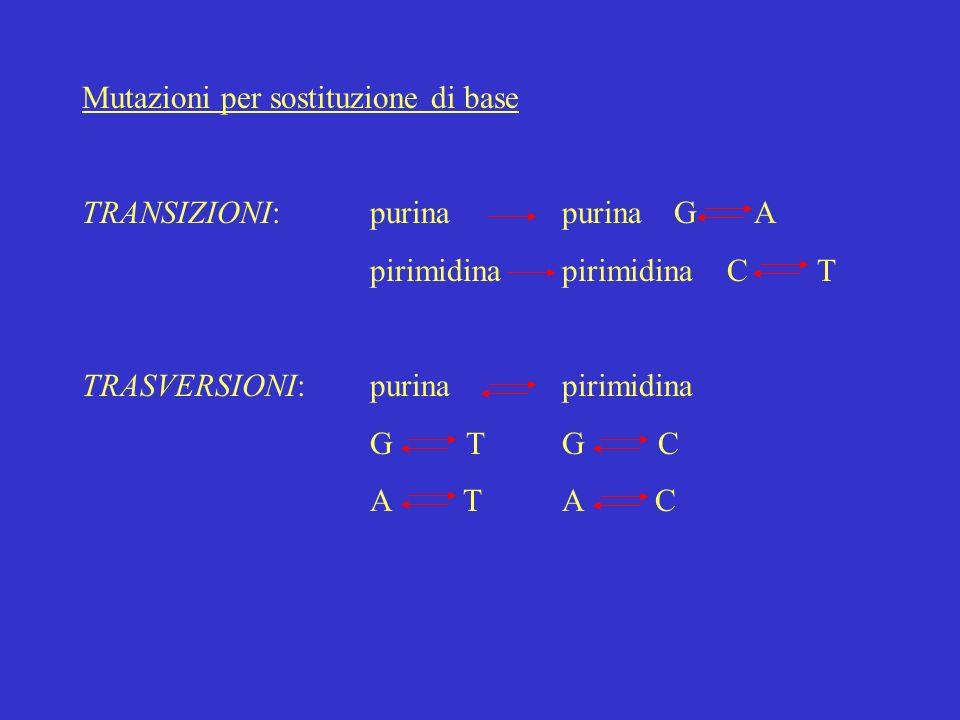 Mutazioni per sostituzione di base TRANSIZIONI:purinapurina GA pirimidinapirimidina C T TRASVERSIONI:purinapirimidina GTGC A TA C
