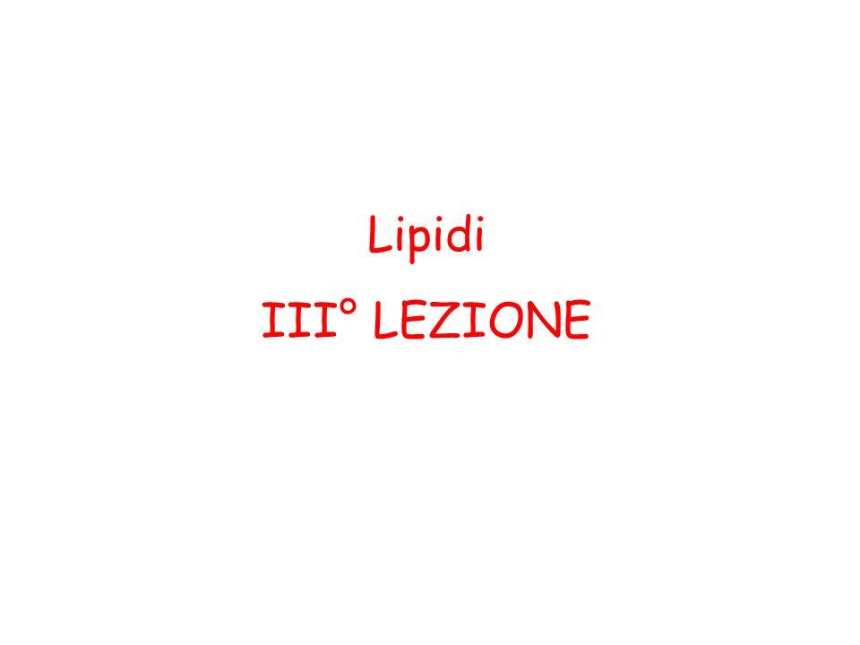 Lipidi III° LEZIONE
