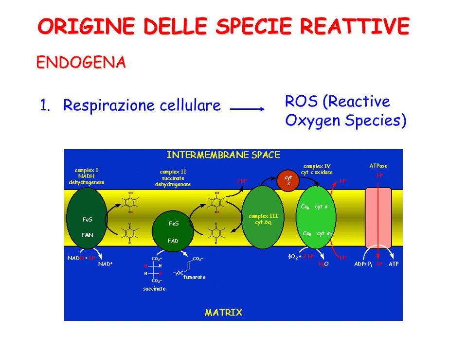 ENDOGENA 1.Respirazione cellulare ROS (Reactive Oxygen Species) ORIGINE DELLE SPECIE REATTIVE