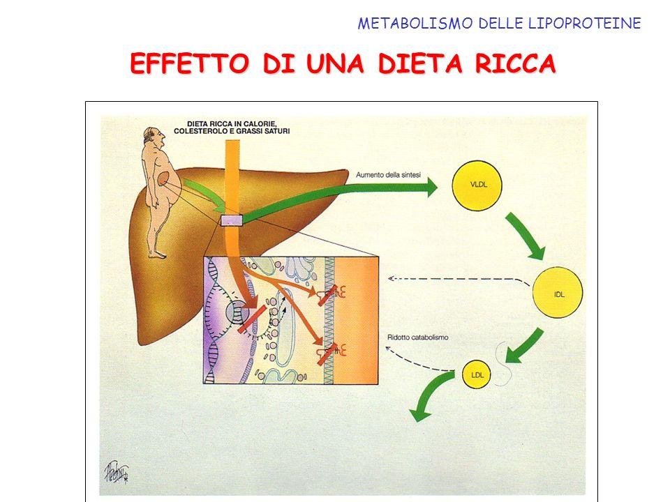 METABOLISMO DELLE LIPOPROTEINE EFFETTO DI UNA DIETA RICCA