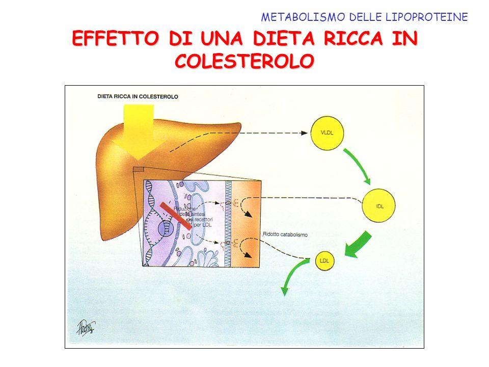 METABOLISMO DELLE LIPOPROTEINE EFFETTO DI UNA DIETA RICCA IN COLESTEROLO