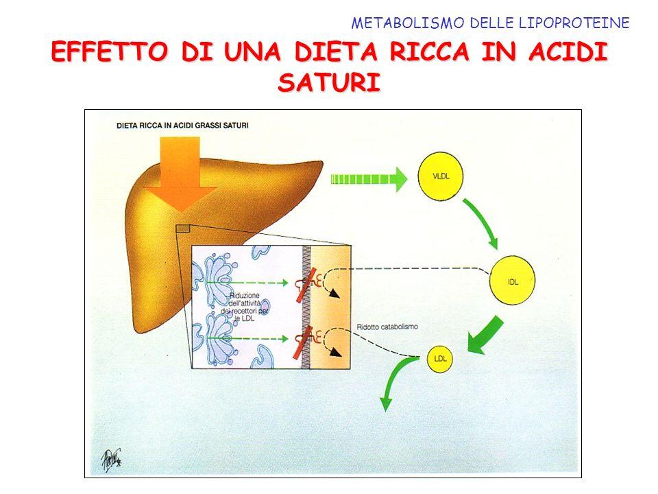 METABOLISMO DELLE LIPOPROTEINE EFFETTO DI UNA DIETA RICCA IN ACIDI SATURI