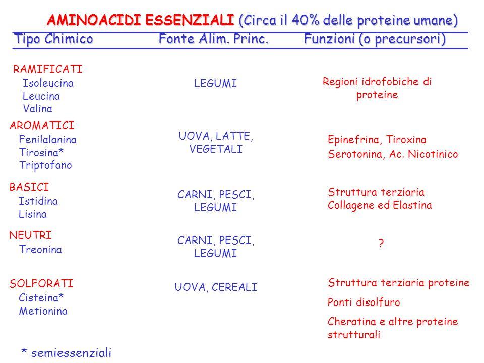 Tipo ChimicoFonte Alim. Princ.Funzioni (o precursori) AMINOACIDI ESSENZIALI (Circa il 40% delle proteine umane) RAMIFICATI Isoleucina Leucina Valina A