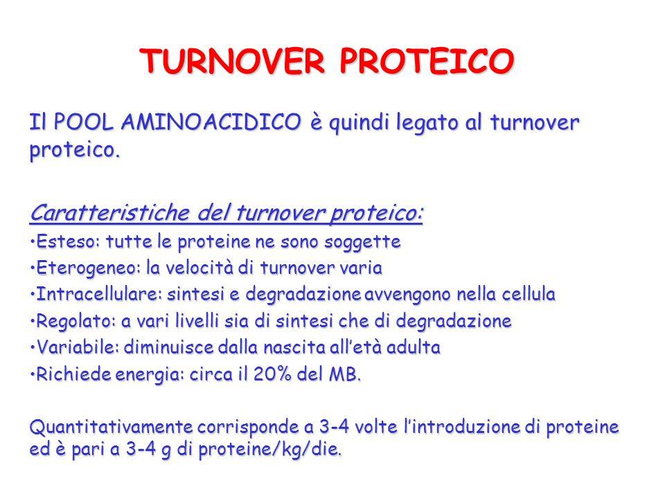 TURNOVER PROTEICO Il POOL AMINOACIDICO è quindi legato al turnover proteico. Caratteristiche del turnover proteico: Esteso: tutte le proteine ne sono