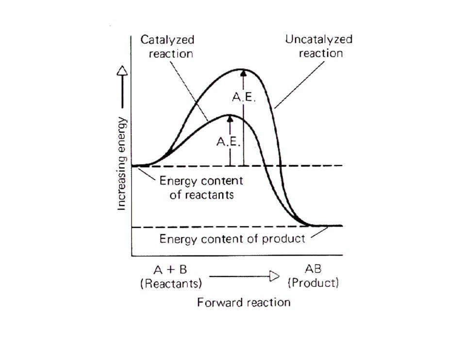 POOL AMINOACIDICO Gli AA e le proteine sono legate tra loro da un rapporto dinamico che consente un flusso di AA da e verso le proteine detto pool aminoacidico.