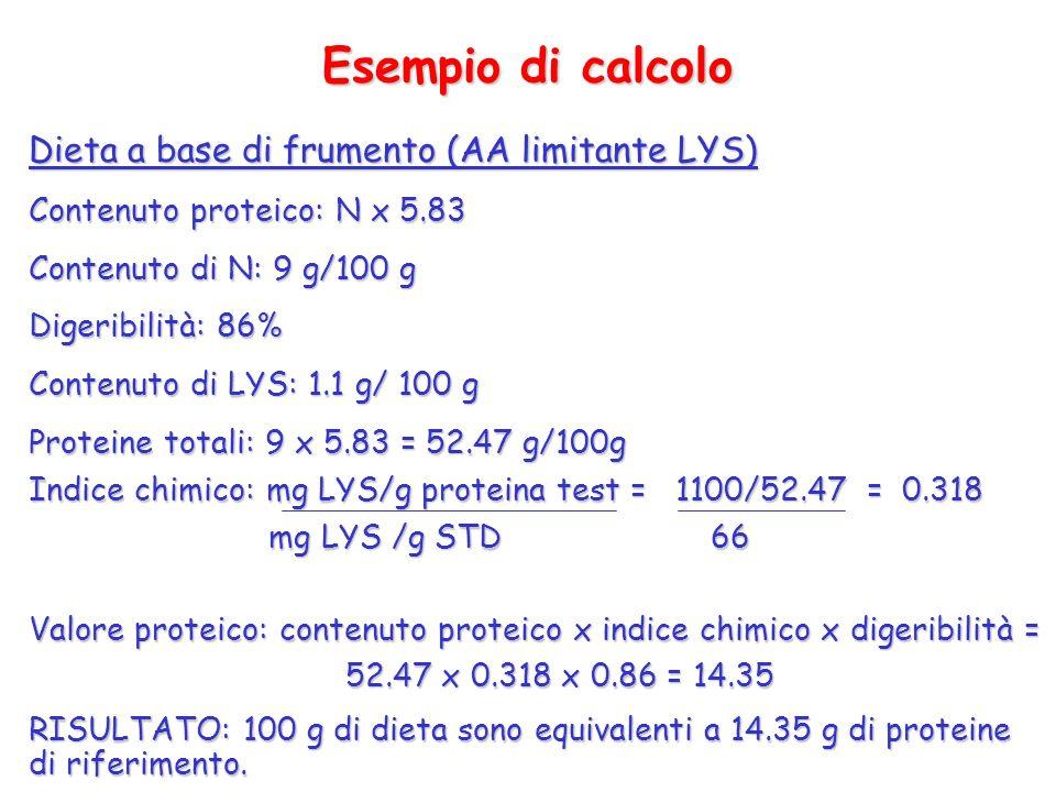 Esempio di calcolo Dieta a base di frumento (AA limitante LYS) Contenuto proteico: N x 5.83 Contenuto di N: 9 g/100 g Digeribilità: 86% Contenuto di L