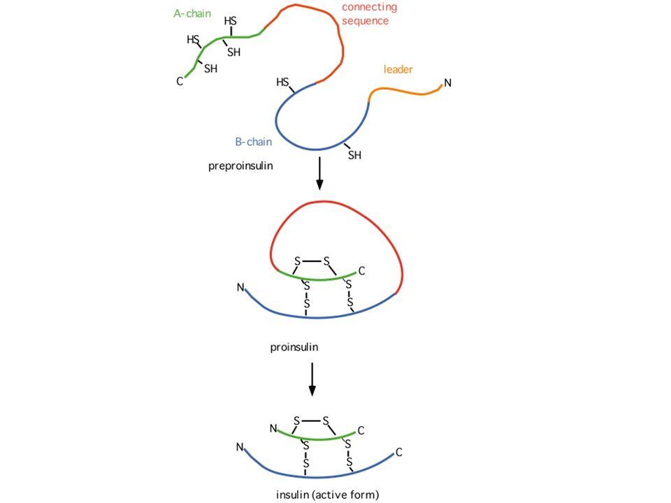 COSTITUENTI DELLE PROTEINE: AMINOACIDI Nellorganismo umano ne sono presenti centinaia ma solo 20 nelle proteine.