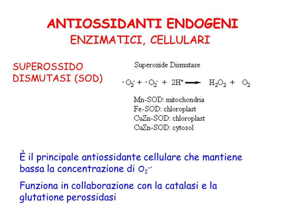 CATALASI (CAT) 2 H 2 O 2 2 H 2 O + O 2 E una eme-proteina presente nei perossisomi e nel citosol degli RBC Insieme alla SOD permette la rapida detossificazione del O 2 - ANTIOSSIDANTI ENDOGENI ENZIMATICI, CELLULARI
