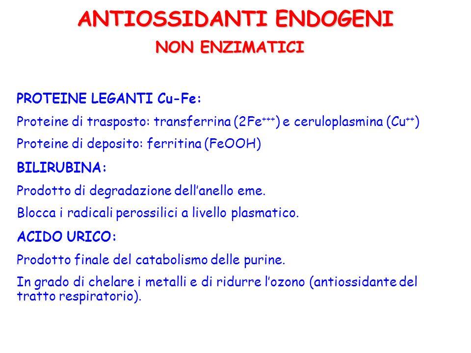 ANTIOSSIDANTI ESOGENI VITAMINICI ACIDO ASCORBICO (Vitamina C) È il principale antiossidante extracellulare Può bloccare O 2 -, HO, H 2 O 2, 1 O 2 Può rigenerare il radicale tocoferile Il radicale ascorbile è rigenerato dalla NADPH deidroascorbato reduttasi, mentre il deidroascorbico dallascorbico reduttasi-GSH.