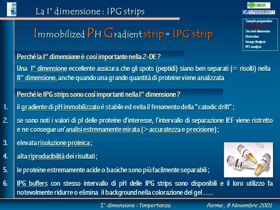 La I° dimensione : IPG strips Una I° dimensione eccellente assicura che gli spots (peptidi) siano ben separati (= risolti) nella II° dimensione, anche