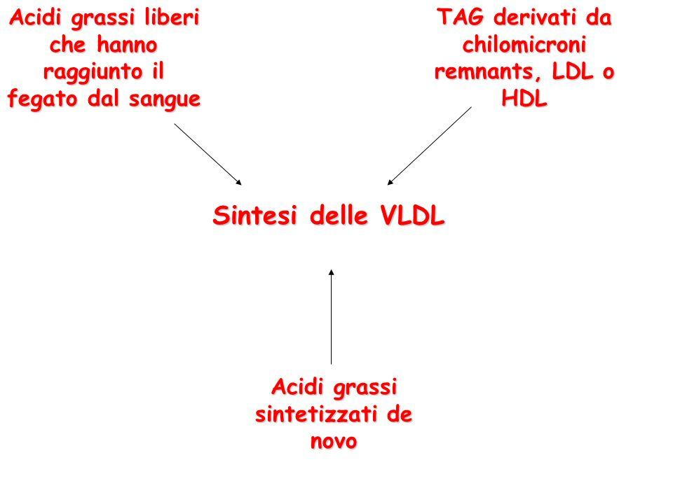 Sintesi delle VLDL Acidi grassi liberi che hanno raggiunto il fegato dal sangue TAG derivati da chilomicroni remnants, LDL o HDL Acidi grassi sintetiz