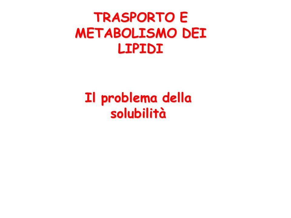 LE LIPOPROTEINE Funzione principale: trasporto dei lipidi e delle sostanze idrofobiche nel sangue.