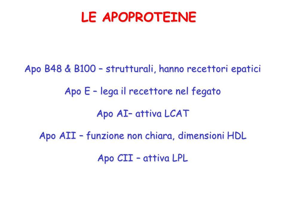 LE APOPROTEINE Apo B48 & B100 – strutturali, hanno recettori epatici Apo E – lega il recettore nel fegato Apo AI– attiva LCAT Apo AII – funzione non c
