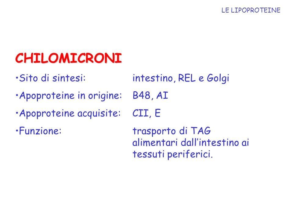LE LIPOPROTEINE CHILOMICRONI Sito di sintesi: intestino, REL e Golgi Apoproteine in origine: B48, AI Apoproteine acquisite: CII, E Funzione: trasporto