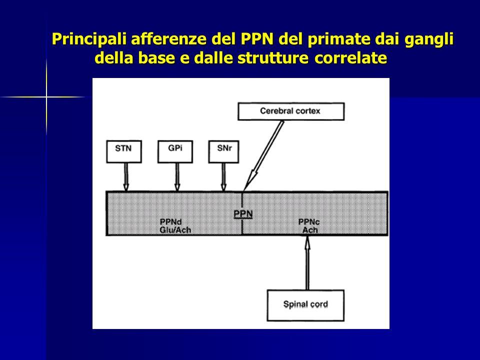 LOOPS CORTICO-GANGLI DELLA BASE-CORTICALI Le proiezioni glutamatergiche cortico-striatali attivano i neuroni medio spinosi nella via diretta ed indiretta e così inducono inibizione ed eccitazione dei nuclei efferenti GPi/SNr, con rispettiva facilitazione o inibizione del movimento (nelle scimmie è stato dimostrato il ruolo preminente della via diretta nella performance di movimenti manuali ed oculomotori complessi) Le proiezioni glutamatergiche cortico-striatali attivano i neuroni medio spinosi nella via diretta ed indiretta e così inducono inibizione ed eccitazione dei nuclei efferenti GPi/SNr, con rispettiva facilitazione o inibizione del movimento (nelle scimmie è stato dimostrato il ruolo preminente della via diretta nella performance di movimenti manuali ed oculomotori complessi) Le proiezioni cortico-subtalamiche sono neuroni monosinaptici a conduzione rapida che sono attivati con le proiezioni cortico-spinali durante il movimento Le proiezioni cortico-subtalamiche sono neuroni monosinaptici a conduzione rapida che sono attivati con le proiezioni cortico-spinali durante il movimento
